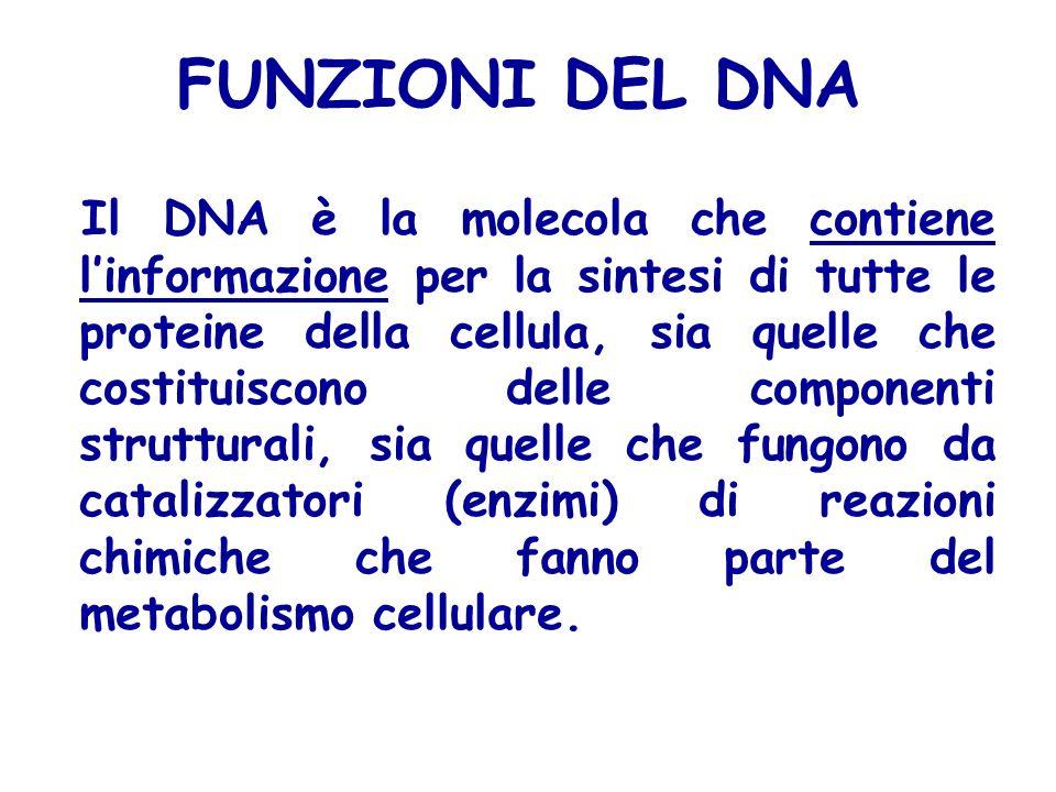 FUNZIONI DEL DNA
