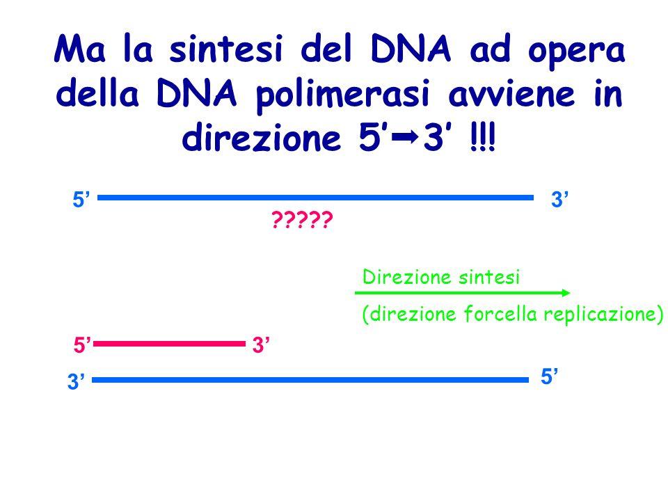 Ma la sintesi del DNA ad opera della DNA polimerasi avviene in direzione 5'3' !!!