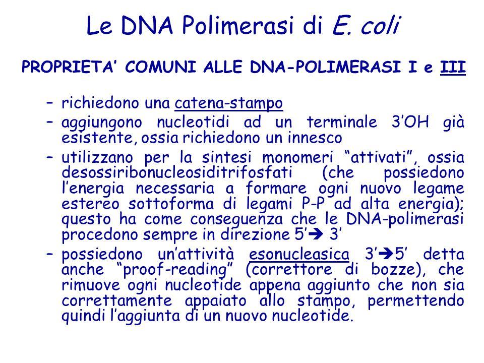 PROPRIETA' COMUNI ALLE DNA-POLIMERASI I e III