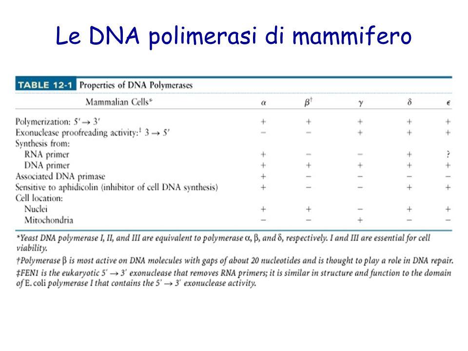 Le DNA polimerasi di mammifero