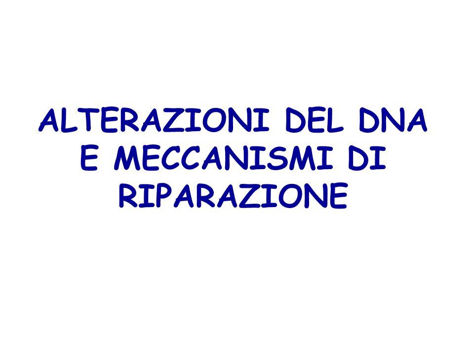ALTERAZIONI DEL DNA E MECCANISMI DI RIPARAZIONE