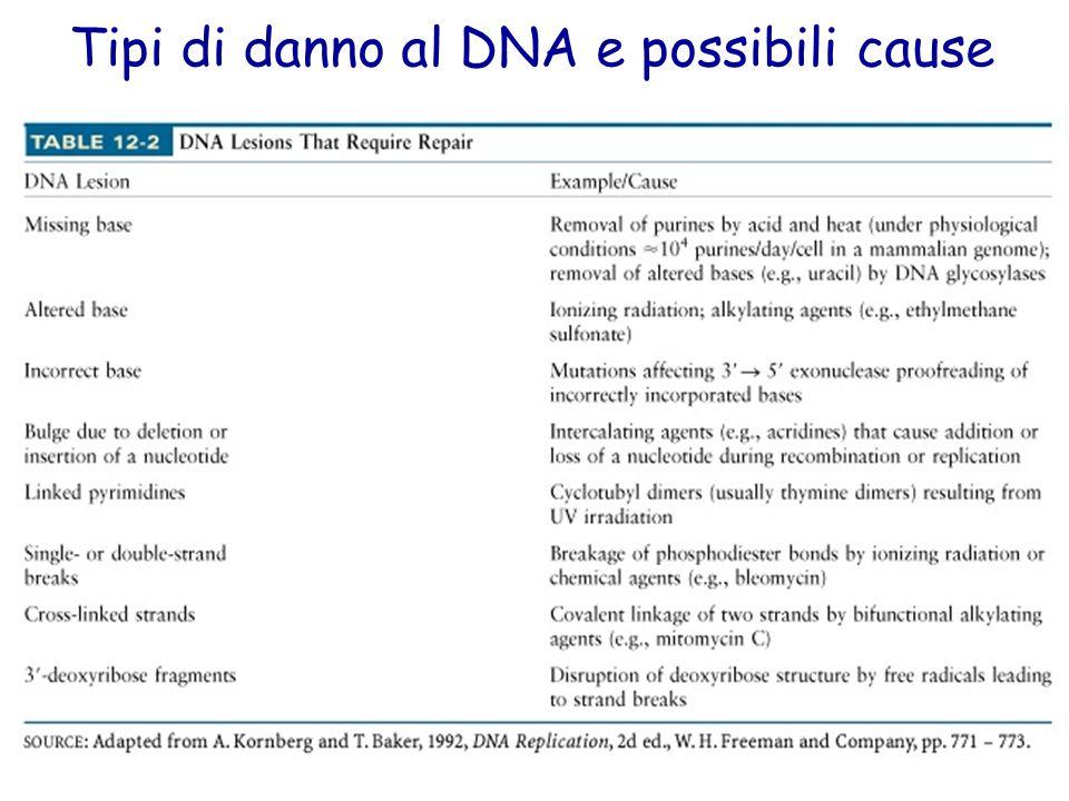 Tipi di danno al DNA e possibili cause