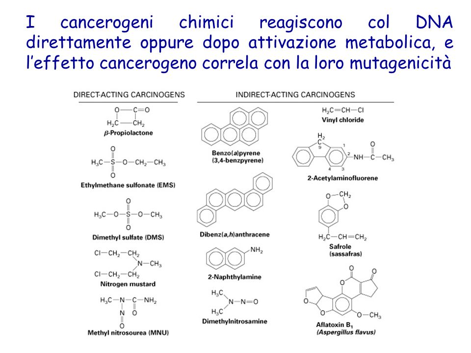 I cancerogeni chimici reagiscono col DNA direttamente oppure dopo attivazione metabolica, e l'effetto cancerogeno correla con la loro mutagenicità