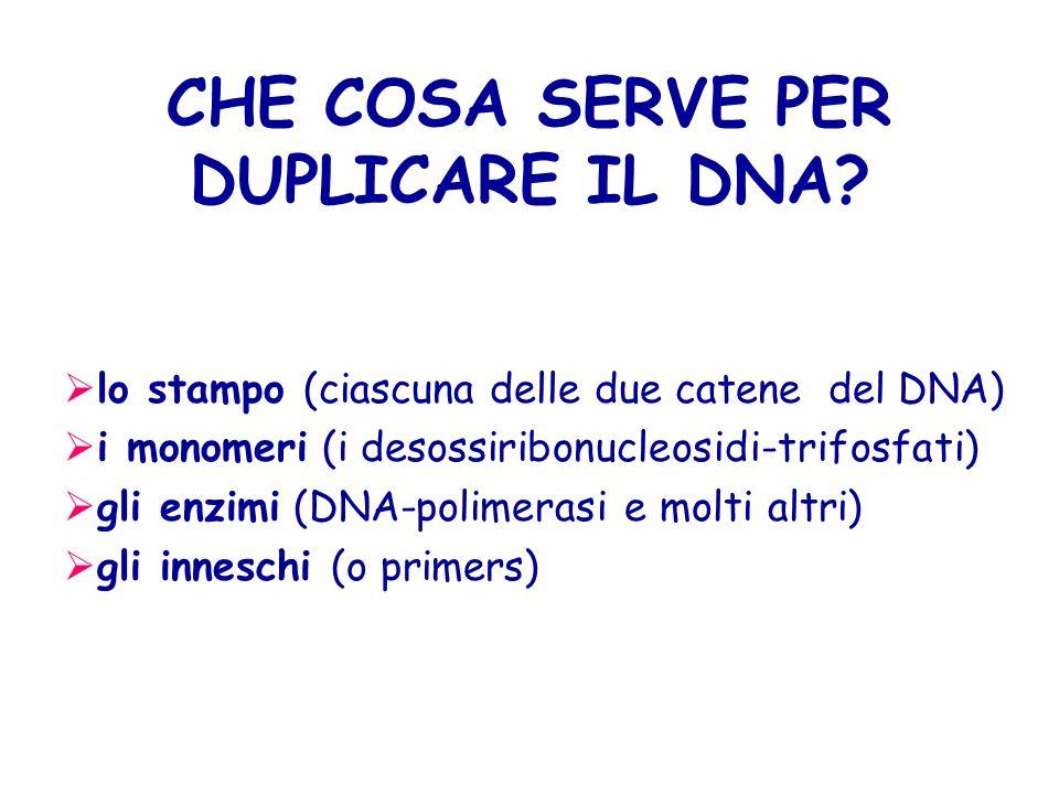 CHE COSA SERVE PER DUPLICARE IL DNA