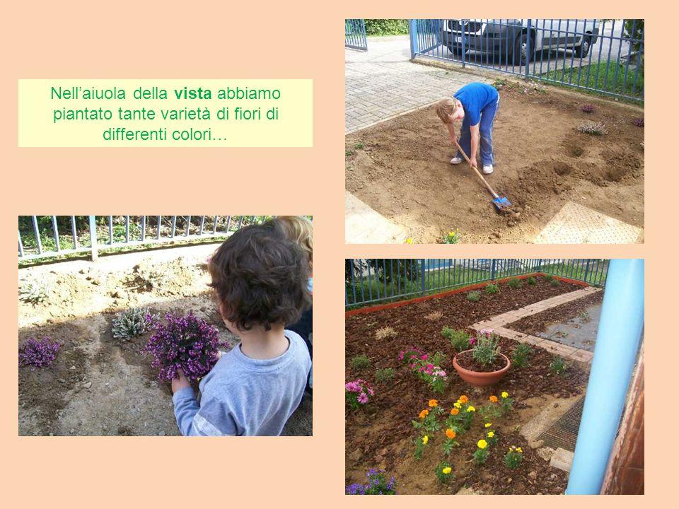 Nell'aiuola della vista abbiamo piantato tante varietà di fiori di differenti colori…