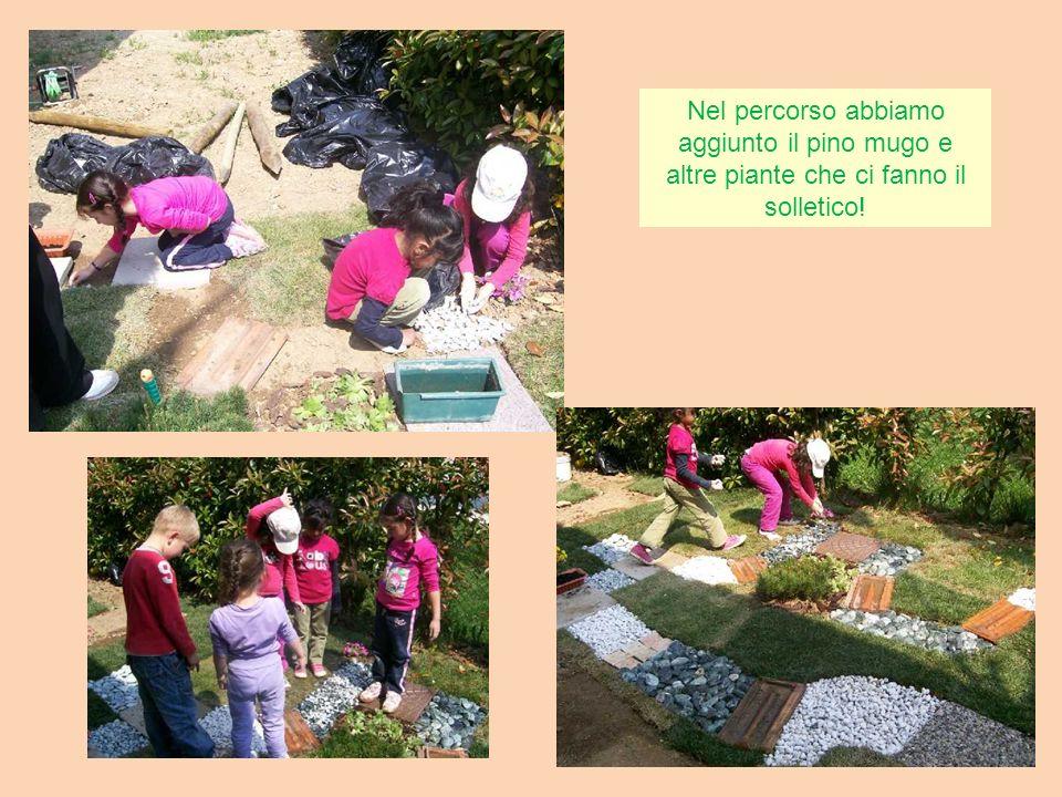 Nel percorso abbiamo aggiunto il pino mugo e altre piante che ci fanno il solletico!