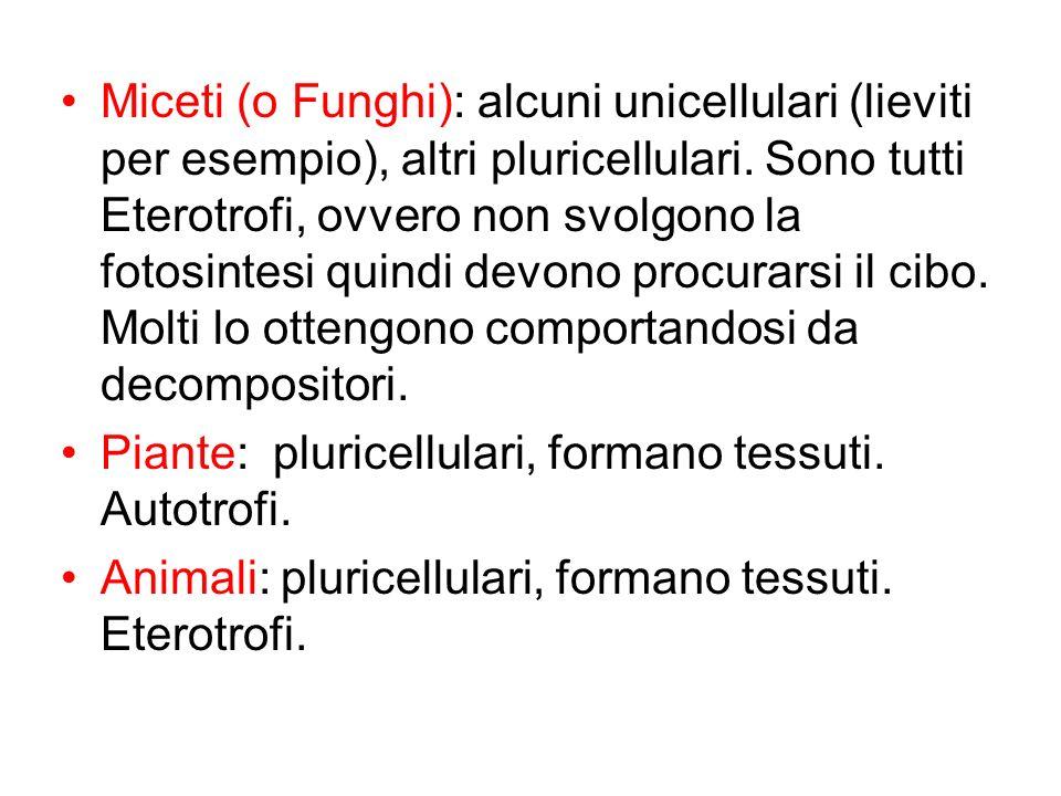 Miceti (o Funghi): alcuni unicellulari (lieviti per esempio), altri pluricellulari. Sono tutti Eterotrofi, ovvero non svolgono la fotosintesi quindi devono procurarsi il cibo. Molti lo ottengono comportandosi da decompositori.