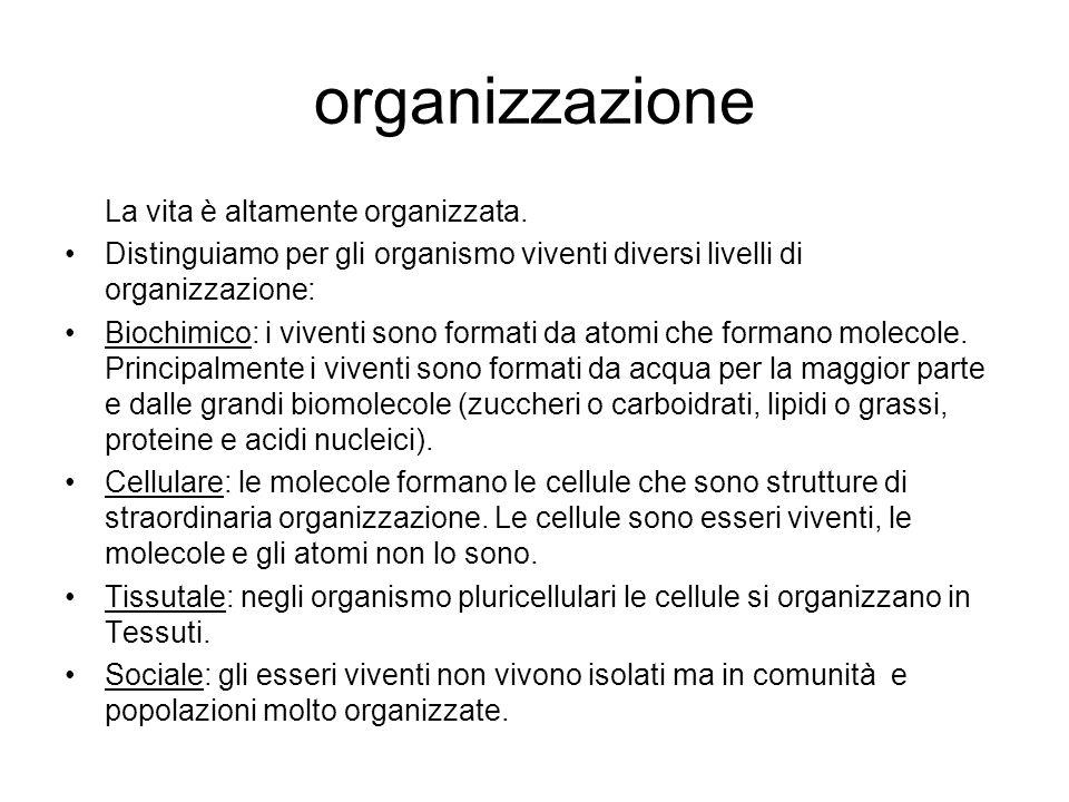 organizzazione La vita è altamente organizzata.