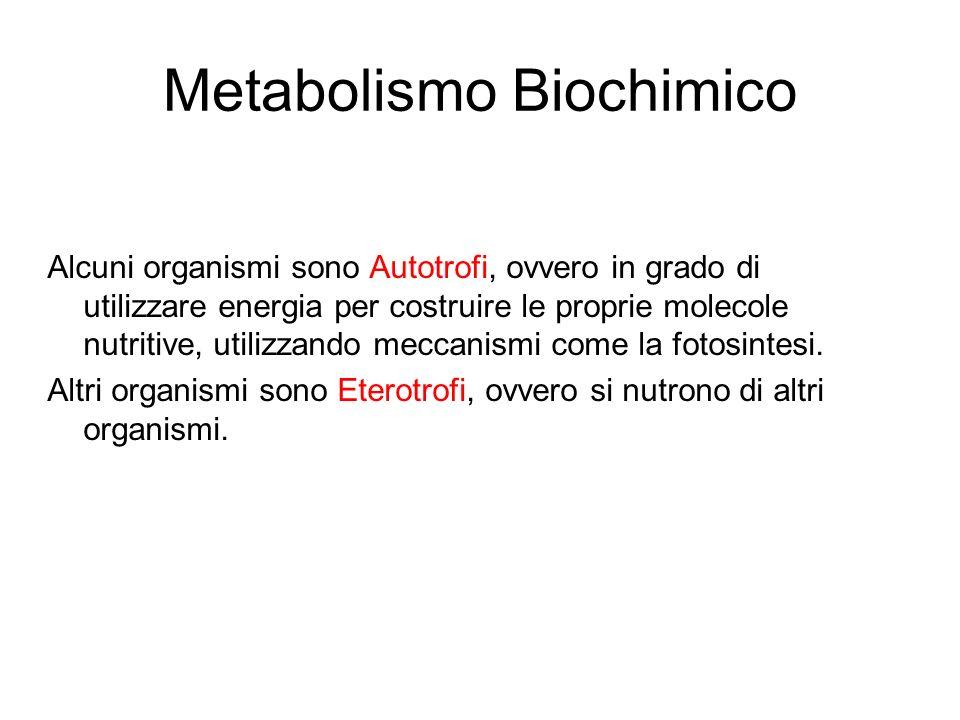 Metabolismo Biochimico