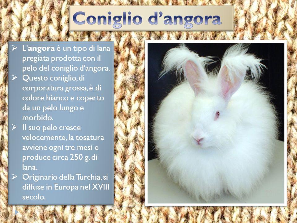 Coniglio d'angora L angora è un tipo di lana pregiata prodotta con il pelo del coniglio d angora.