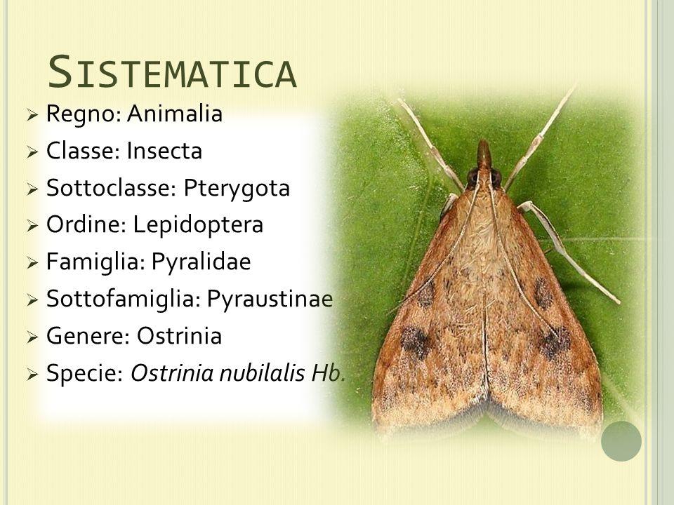 Sistematica Regno: Animalia Classe: Insecta Sottoclasse: Pterygota