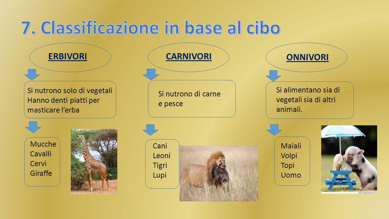 7. Classificazione in base al cibo