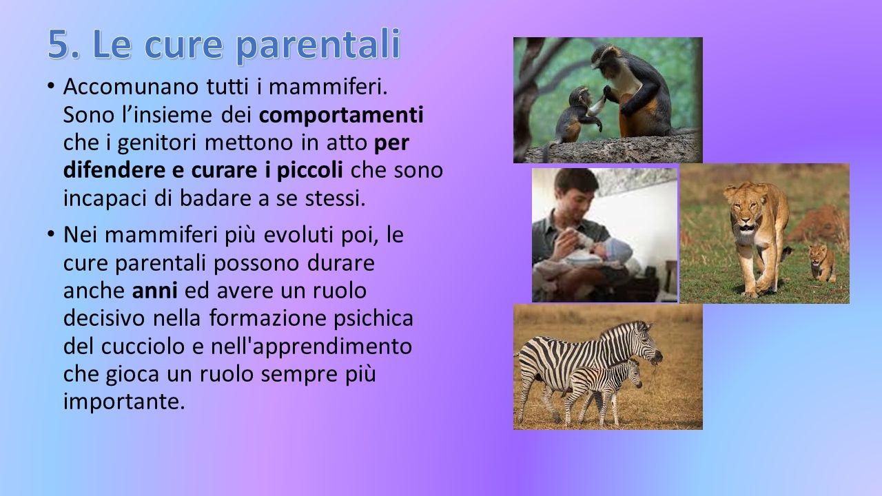 5. Le cure parentali
