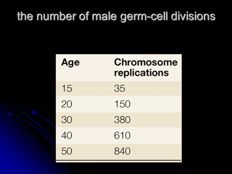the number of male germ-cell divisions