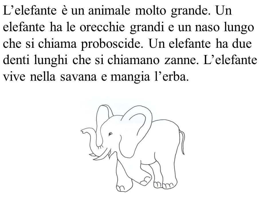 L'elefante è un animale molto grande