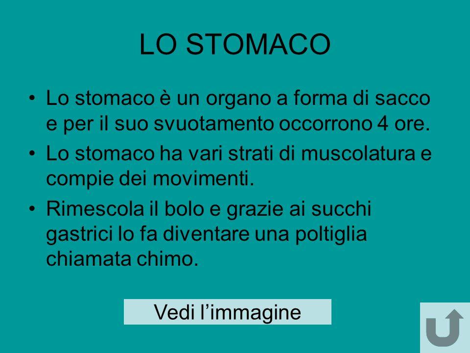 LO STOMACO Lo stomaco è un organo a forma di sacco e per il suo svuotamento occorrono 4 ore.