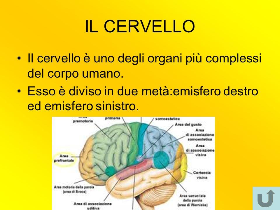 IL CERVELLO Il cervello è uno degli organi più complessi del corpo umano.