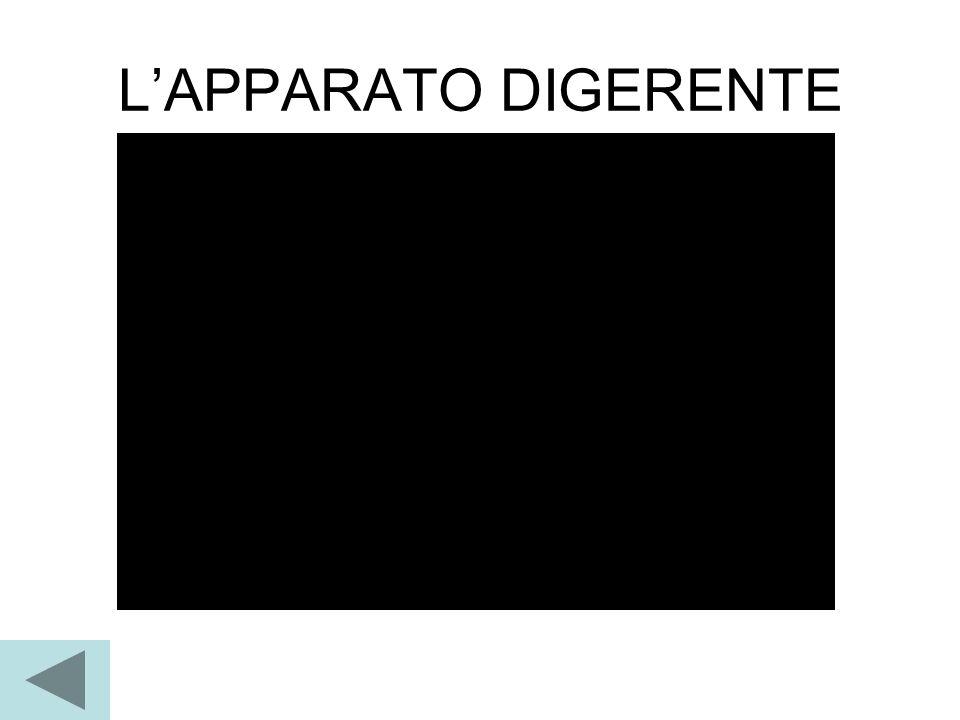 L'APPARATO DIGERENTE