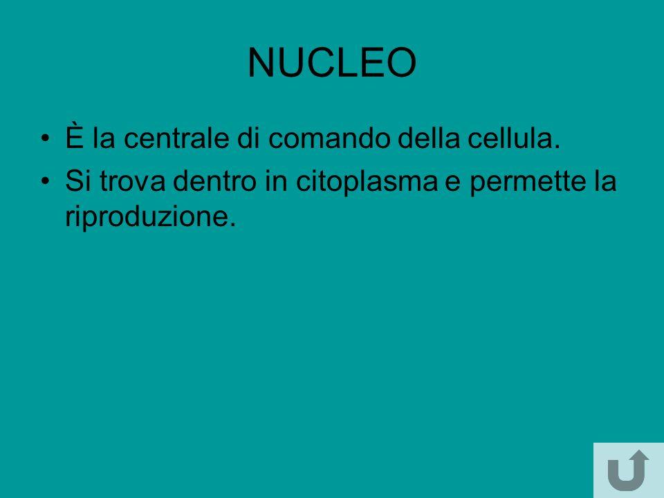 NUCLEO È la centrale di comando della cellula.