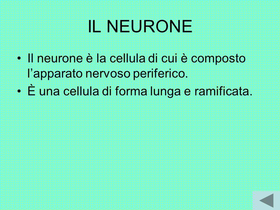 IL NEURONE Il neurone è la cellula di cui è composto l'apparato nervoso periferico.