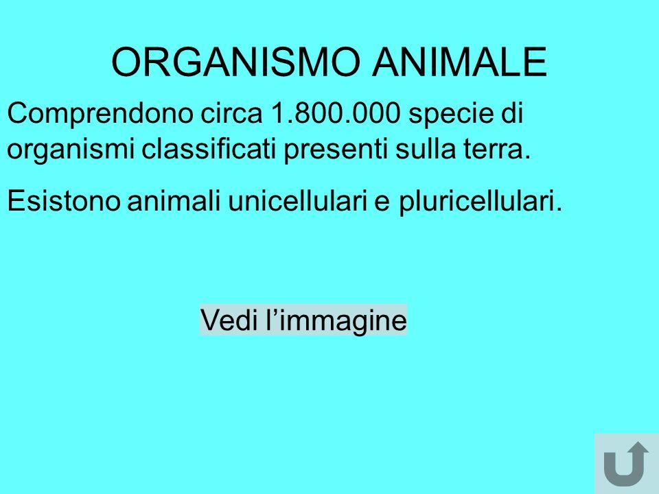 ORGANISMO ANIMALE Comprendono circa 1.800.000 specie di organismi classificati presenti sulla terra.