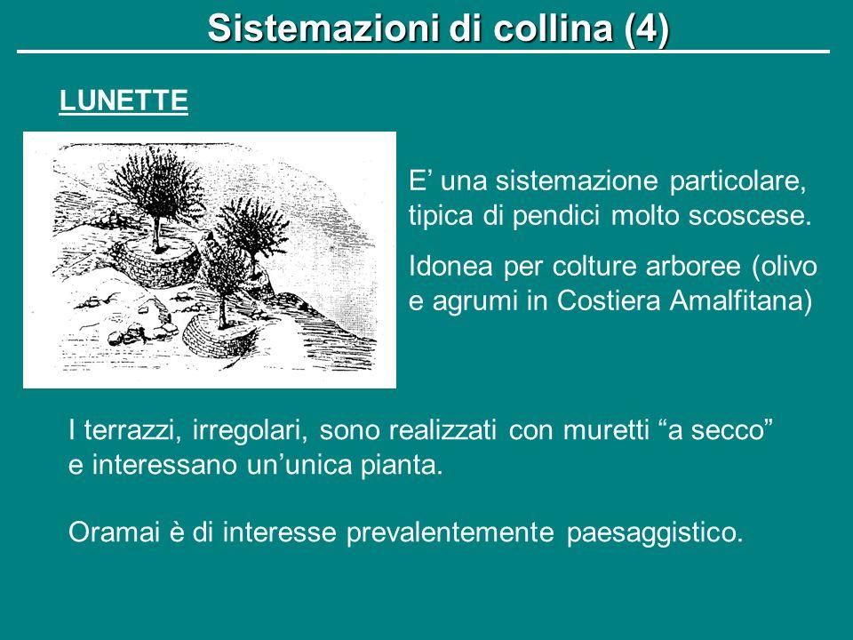 Sistemazioni di collina (4)