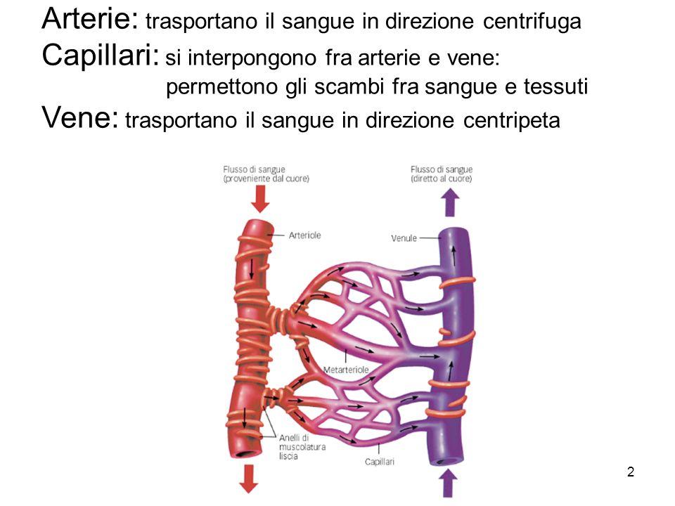 Fantastisch Anatomie Und Physiologie Der Venen Und Arterien Bilder ...