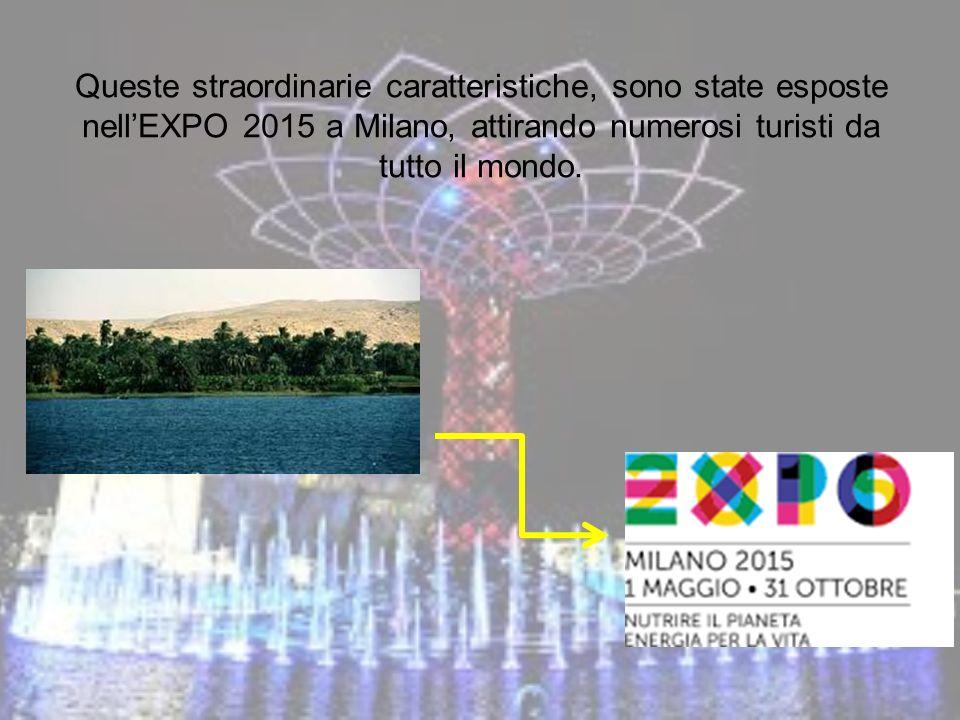 Queste straordinarie caratteristiche, sono state esposte nell'EXPO 2015 a Milano, attirando numerosi turisti da tutto il mondo.