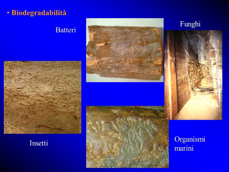 • Biodegradabilità Funghi Batteri Organismi marini Insetti