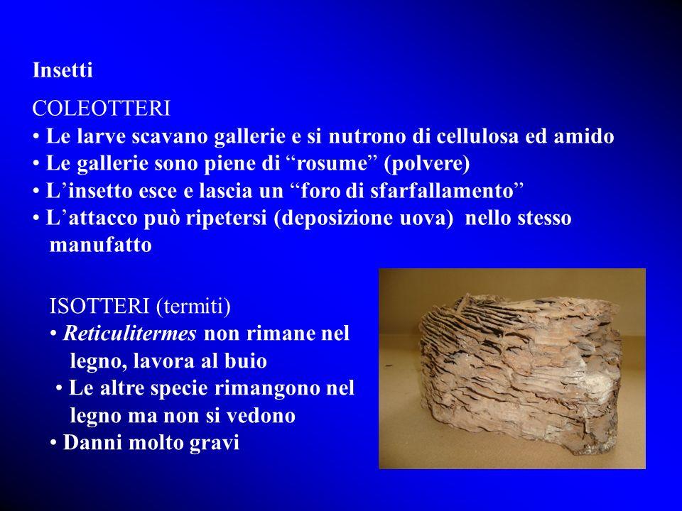 Insetti COLEOTTERI. • Le larve scavano gallerie e si nutrono di cellulosa ed amido. • Le gallerie sono piene di rosume (polvere)