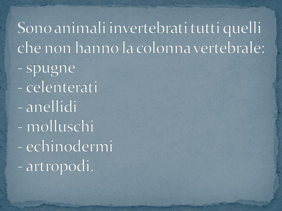 Sono animali invertebrati tutti quelli che non hanno la colonna vertebrale: - spugne - celenterati - anellidi - molluschi - echinodermi - artropodi.