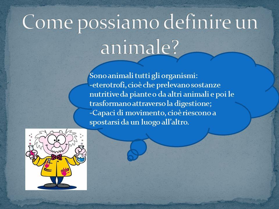 Come possiamo definire un animale