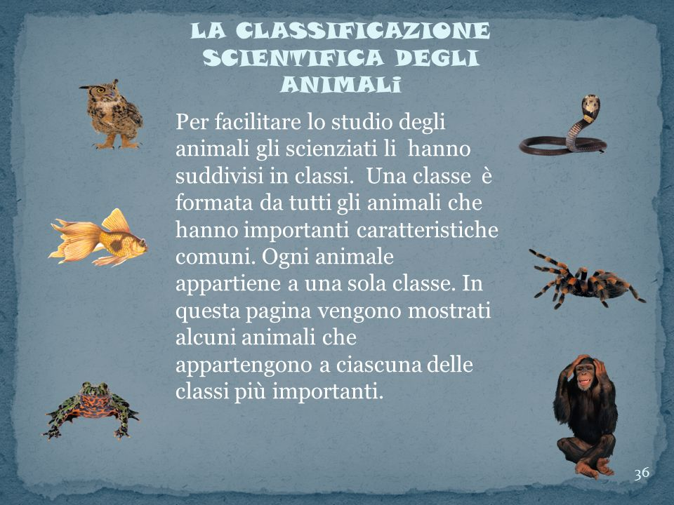 LA CLASSIFICAZIONE SCIENTIFICA DEGLI ANIMALi