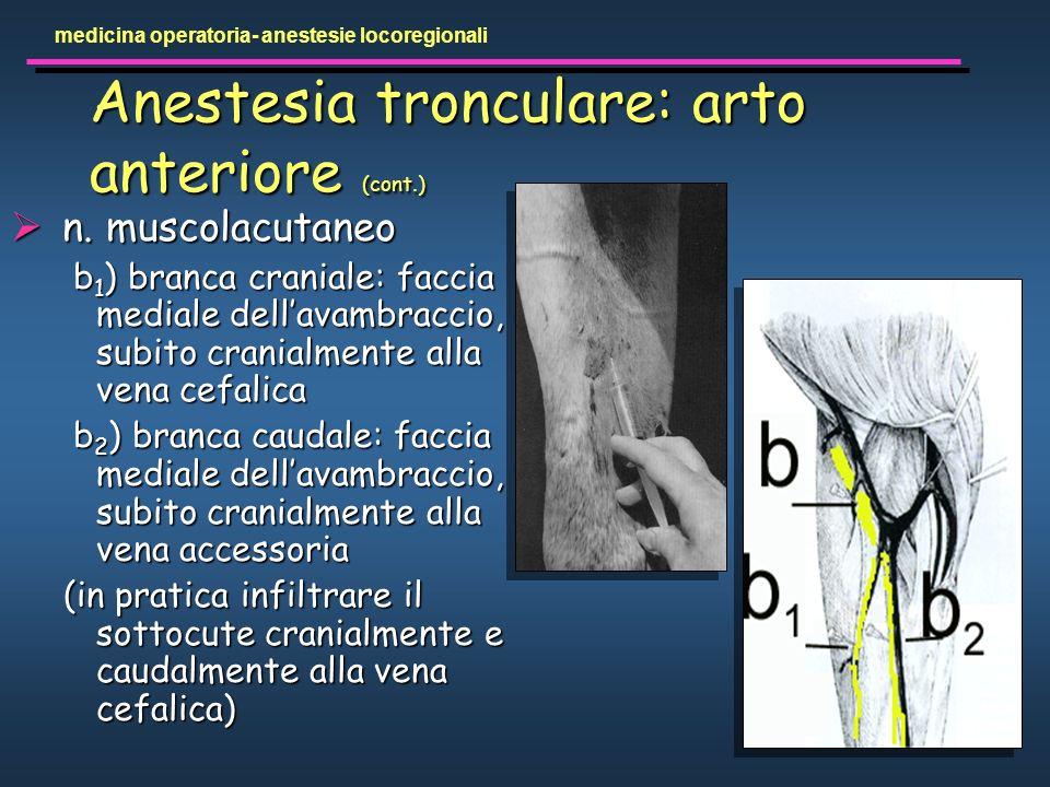 Anestesia tronculare: arto anteriore (cont.)
