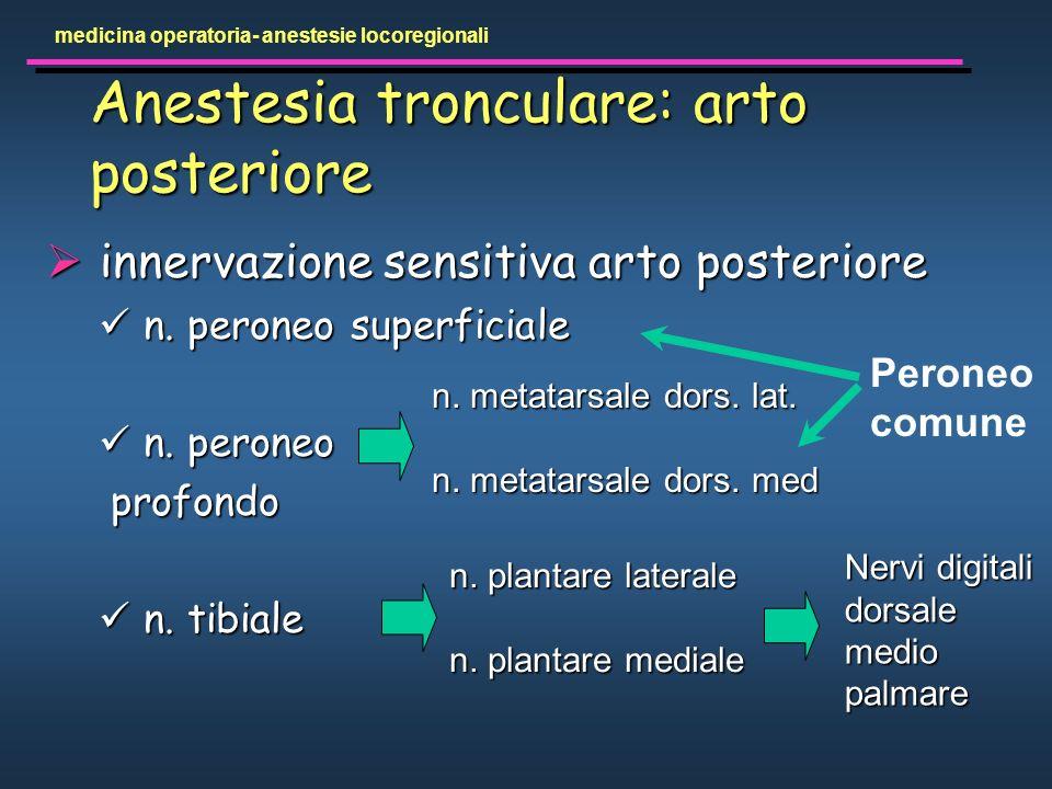 Anestesia tronculare: arto posteriore