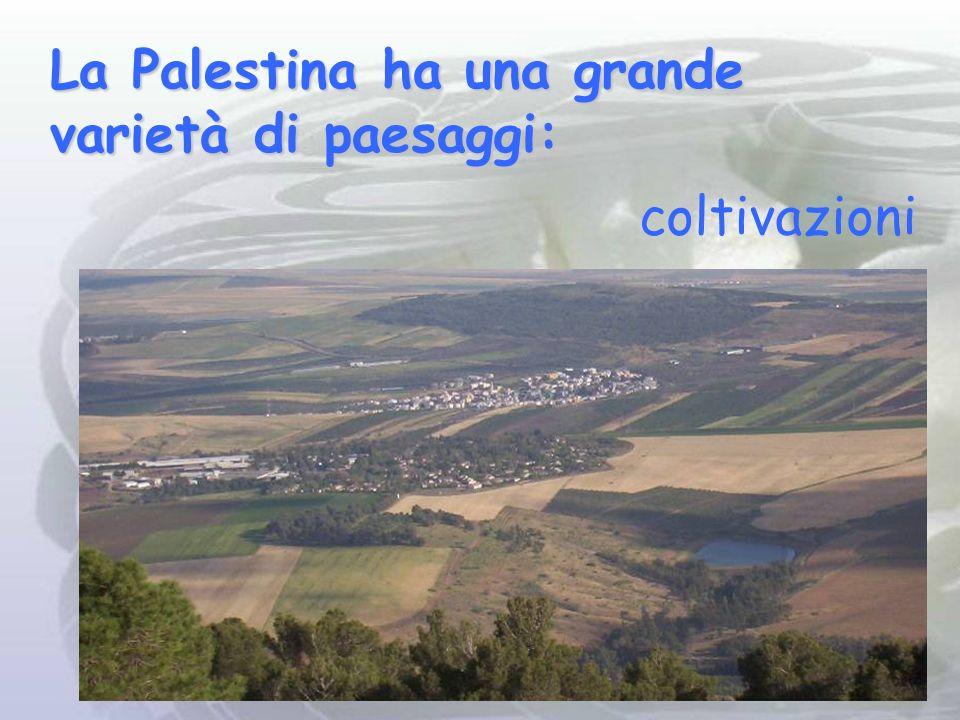 La Palestina ha una grande varietà di paesaggi: