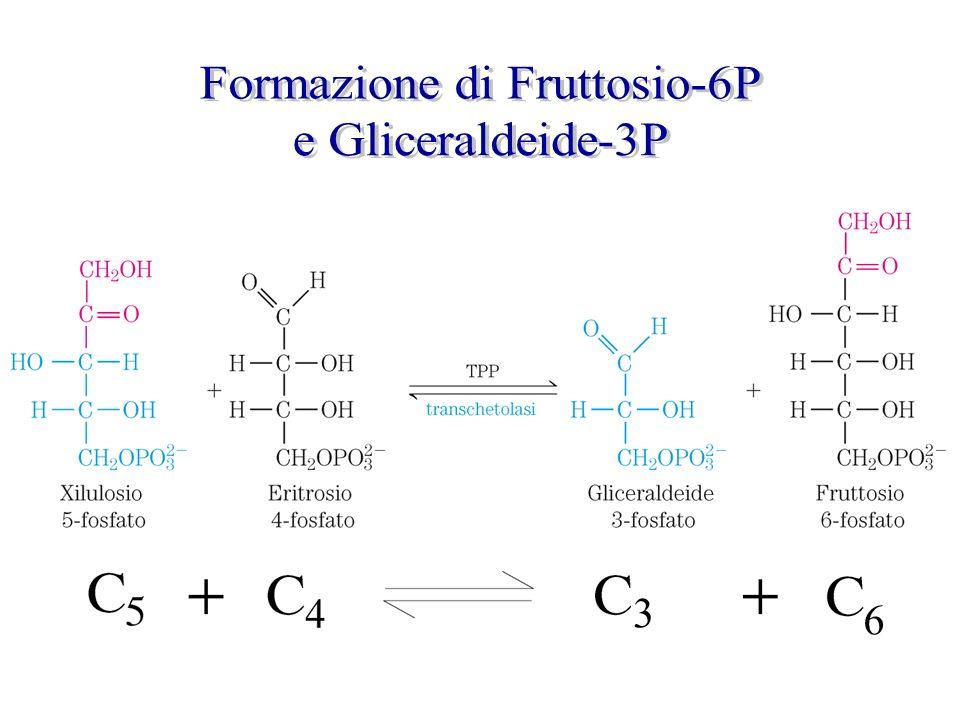 Formazione di Fruttosio-6P