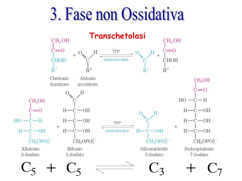 3. Fase non Ossidativa Transchetolasi 7 3
