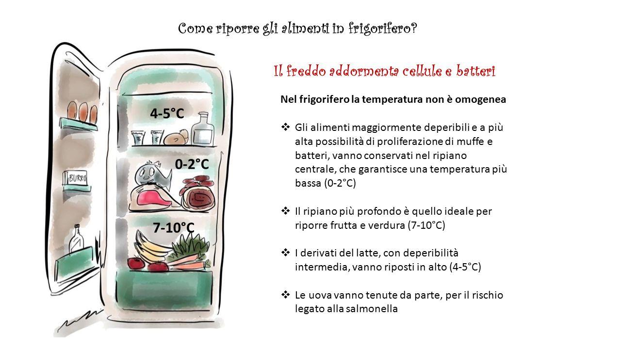 Il frigorifero perfetto ppt scaricare for Frigorifero temperatura