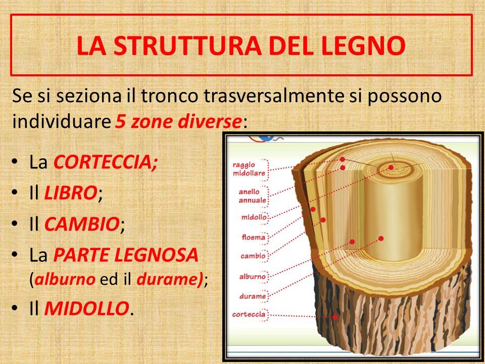 LA STRUTTURA DEL LEGNO Se si seziona il tronco trasversalmente si possono individuare 5 zone diverse: