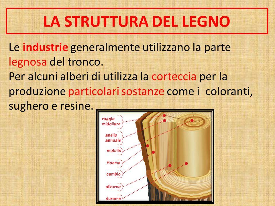 LA STRUTTURA DEL LEGNO Le industrie generalmente utilizzano la parte legnosa del tronco.