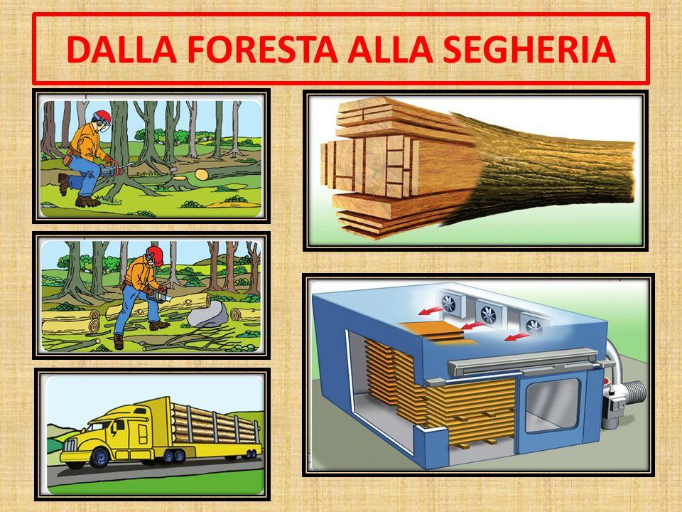 DALLA FORESTA ALLA SEGHERIA