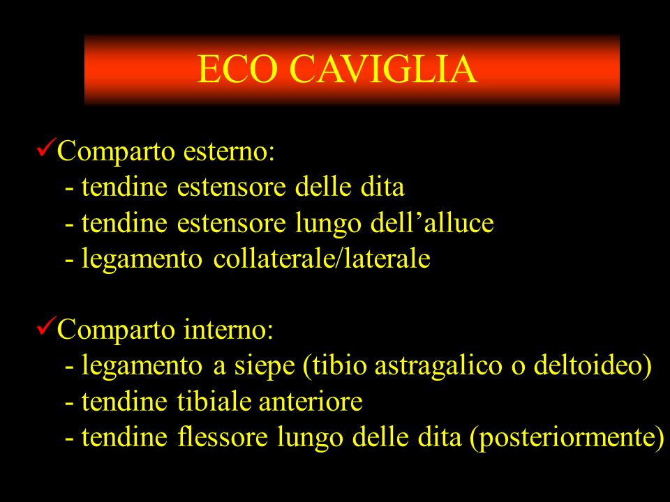 ECO CAVIGLIA Comparto esterno: - tendine estensore delle dita