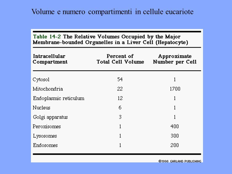 Volume e numero compartimenti in cellule eucariote