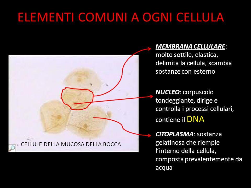 ELEMENTI COMUNI A OGNI CELLULA