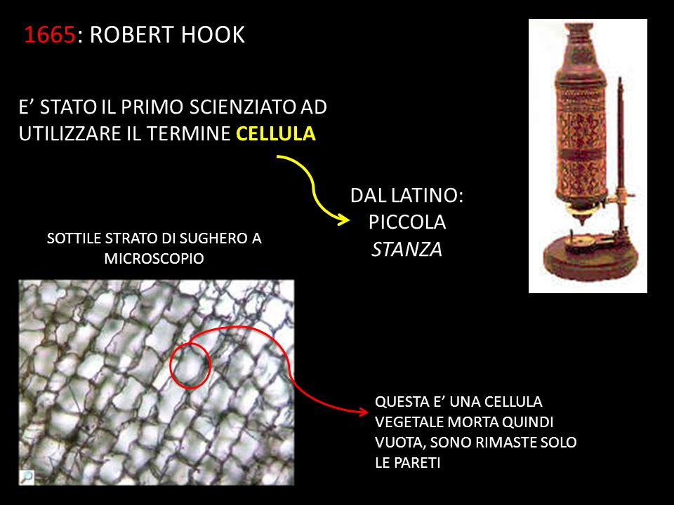 1665: ROBERT HOOK E' STATO IL PRIMO SCIENZIATO AD UTILIZZARE IL TERMINE CELLULA. DAL LATINO: PICCOLA STANZA.
