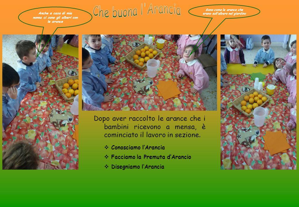 Che buona l Arancia Sono come le arance che erano sull'albero nel giardino. Anche a casa di mia. nonna ci sono gli alberi con le arance.