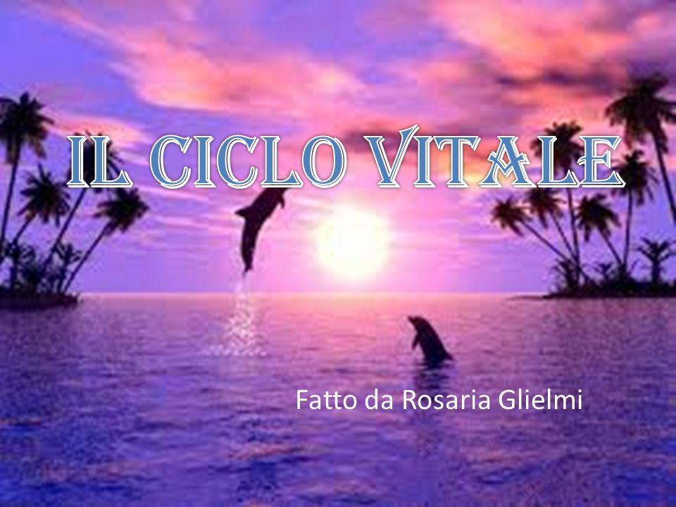 Fatto da Rosaria Glielmi