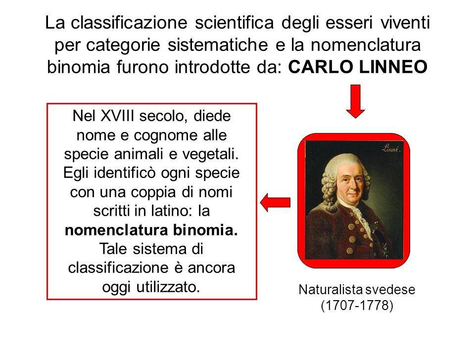 La classificazione scientifica degli esseri viventi per categorie sistematiche e la nomenclatura binomia furono introdotte da: CARLO LINNEO