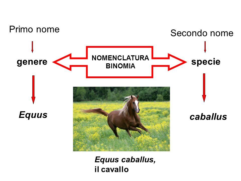Primo nome Secondo nome genere specie Equus caballus